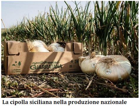 La cipolla siciliana nella produzione nazionale